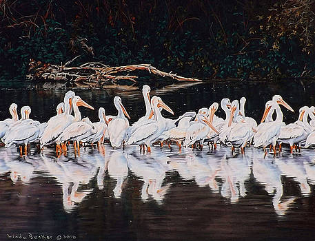 Clear Lake Pelicans by Linda Becker