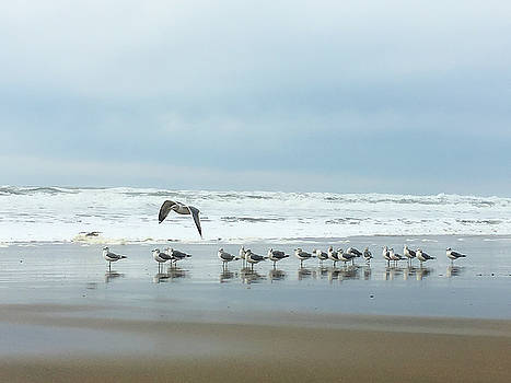 Cleared For Takeoff by Donna Blackhall