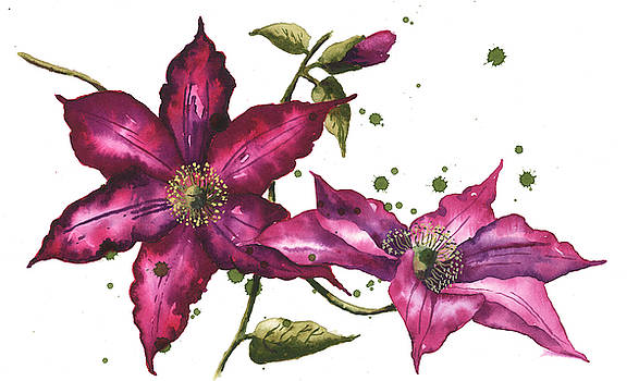Clematis Painting by Alison Fennell