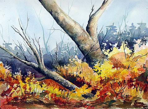 Cletus' Tree by Sam Sidders