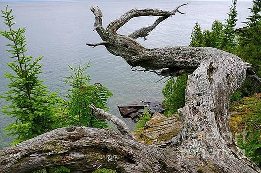 Cliff Top View by Sandra Updyke