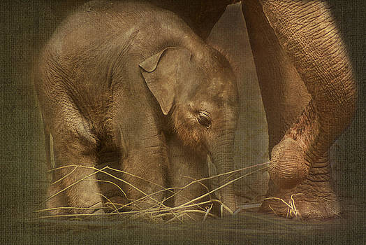 Close to mom... - Little elephant by Steppeland -