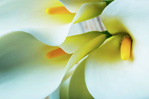 Close Up Calla Lilies by Garry Gay