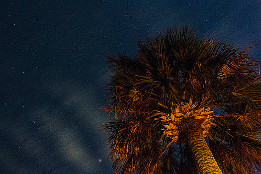 Cloud Waves Over a Palm by Brent L Ander
