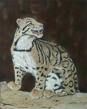 Clouded Leopard by Charles Hubbard