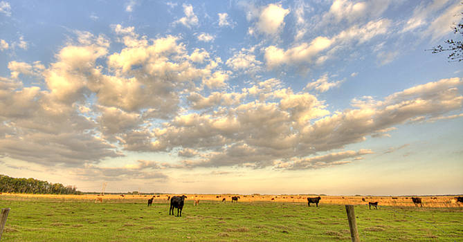 Clouds and Cows by Andrew Armstrong  -  Mad Lab Images