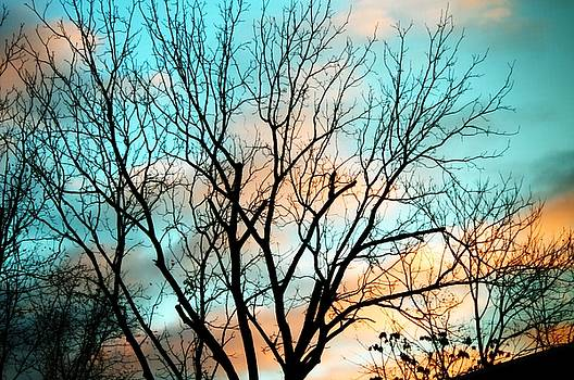Cloudy trees by Gerald Kloss