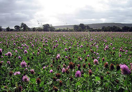 Kurt Van Wagner - Clover Field Wiltshire England