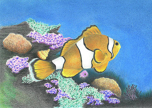 Clownfish by Troy Levesque