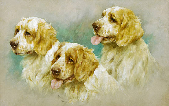 Clumber Spaniels by Arthur Wardle
