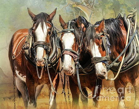 Clydesdale Conversation by Trudi Simmonds