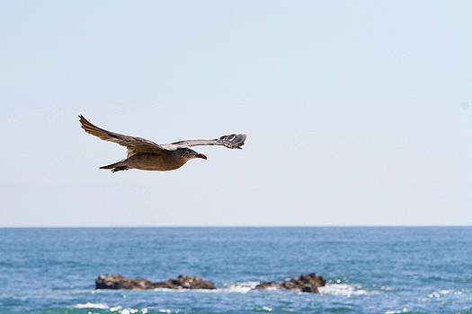 Coastal Flight by Shoal Hollingsworth