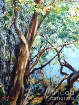 Coastal Forest by Mary Lynne Powers