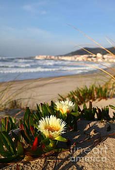 James Brunker - Coastal Scenery in Northern Portugal