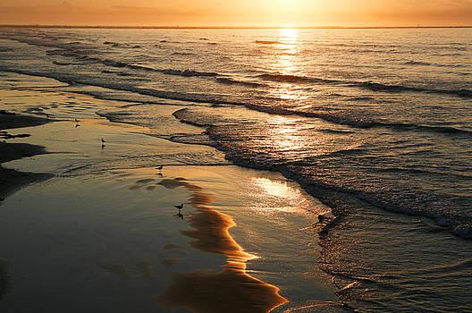Marilyn Hunt - Coastal Sunrise