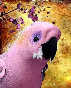 Cockatoo by John Junek