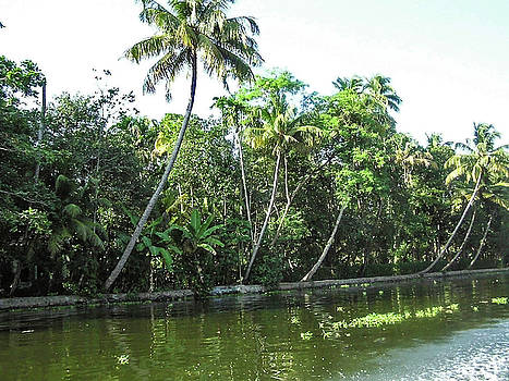 Coconut trees and other plants lined up next to a creek by Ashish Agarwal