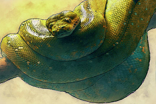 Coiled by Jack Zulli