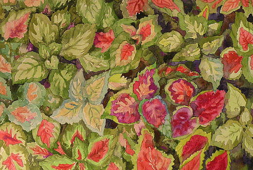 Coleus Variety Pack by Wendy Hill