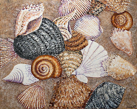 Collecting Shells by Sloane Keats