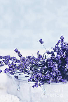 Collection of Lavender  by Stephanie Frey
