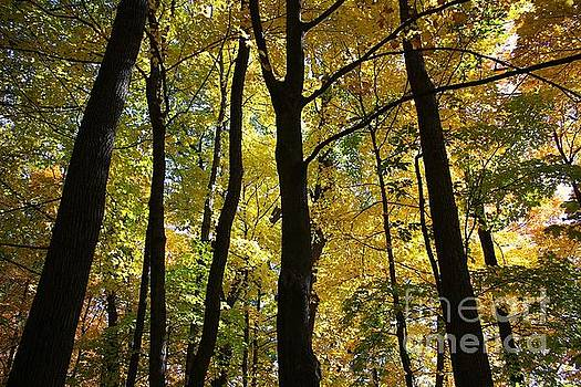 Color in Baraboo by Veronica Batterson