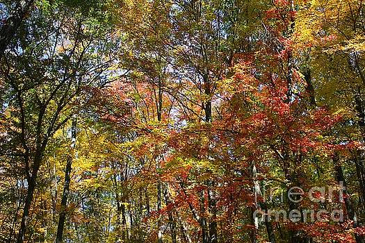 Color in Wisconsin by Veronica Batterson