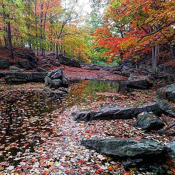 Color of Fall by Hillary Raimo