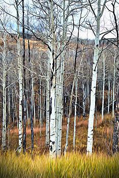 James Steele - Colorado Fall Aspen