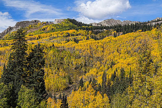 James BO  Insogna - Colorado Golden Autumn Bliss
