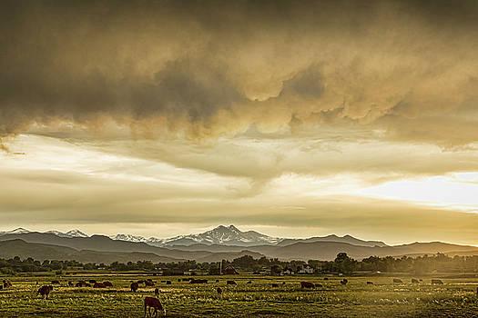 Colorado Grazing by James BO Insogna
