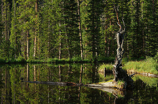 Colorado Reflections by Jerry Mann