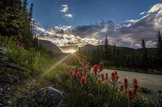 Colorado Wildflowers Under Evening Sun by Michael J Bauer