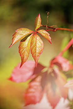 Colorful autumn by Cindy Grundsten