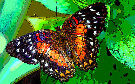 Colorful Butterfly by Charles Shoup