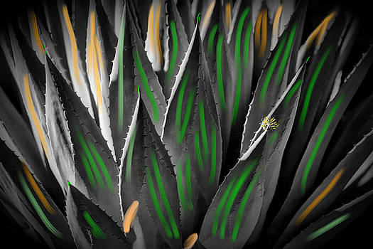 Colorful Cacti by Richard Gehlbach
