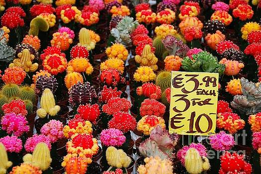 Colorful Cactus by Josephine Benevento-Johnston
