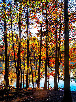 Colorful Contrasted Trees by Andrew Kazmierski