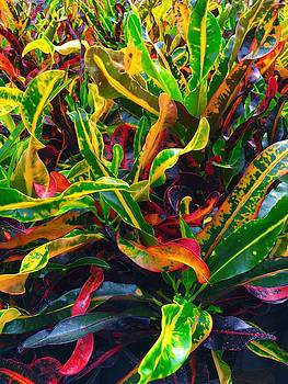 Colorful Crotons by Kay Gilley