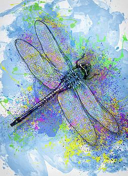 Jack Zulli - Colorful Dragonfly