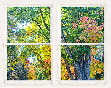 James BO  Insogna - Colorful Forest Rustic Whitewashed Window View