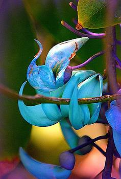 Colorful Jade Blossom by Lori Seaman