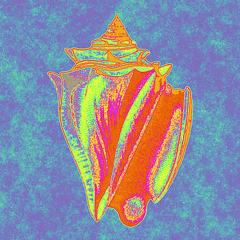 Colorful King Conch Shell by Joy McKenzie