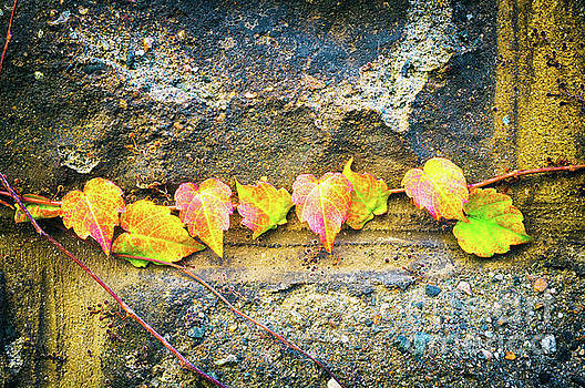 Colorful leaves by Silvia Ganora