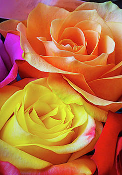 Colorful Lovely Roses by Garry Gay
