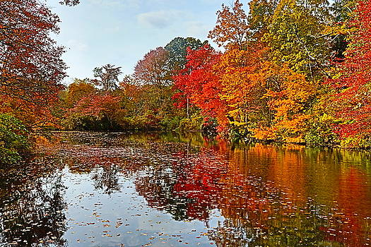 Colorful Season by DVP Artography