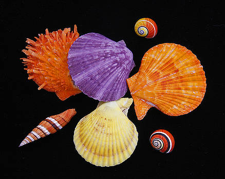 Colorful Shells III by Kelly S Andrews