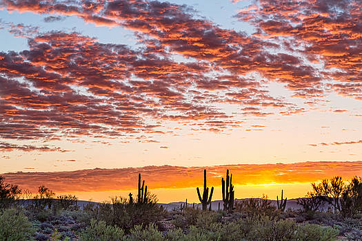 Colorful Sonoran Desert Sunrise by James BO Insogna