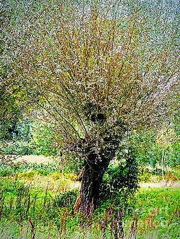 Colorful tree by Nick  Biemans