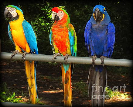 Colorful trio by Lisa Conner
